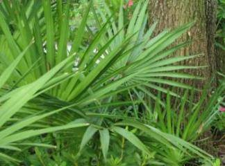takinti hastaligina iyi gelen bitkiler