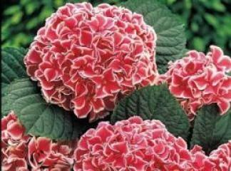 şifalı Bitkilerim Ms Hastalığı Bitkisel Tedavi